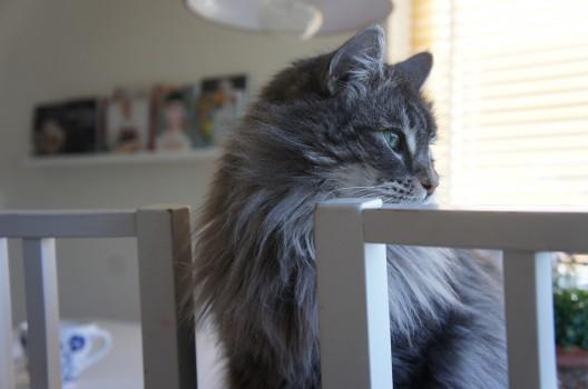 Katter och bloggar