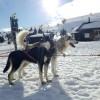 Skidor och päls