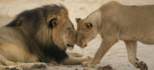 Cecil och machonormen